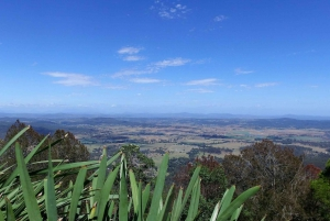 Tamborine Mountain: Guided Half-Day Rainforest Tour