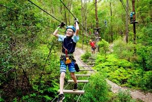 Tamborine Mountain: High Ropes Course