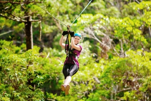 TreeTop Challenge Tamborine Mountain Guided Zipline Tour