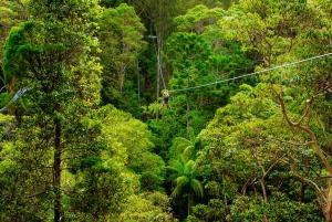 TreeTop Challenge Tamborine Mountain Guided Zipline Tour