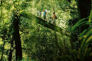 World Heritage Rain Forest and Wilderness Tour