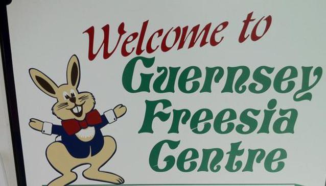 Guernsey Freesia Centre