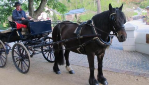 Sark Special Ride & Dine Offer