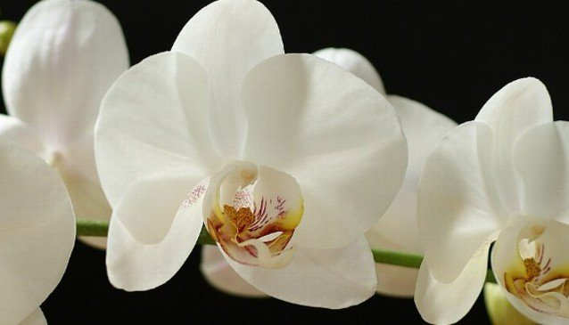 A White Orchid Wedding