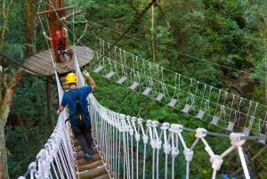 Big Island: 3-Hour Kohala Canopy Zipline Adventure