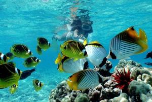 Big Island: Eco-Friendly Snorkel & Dolphin Watching Tour