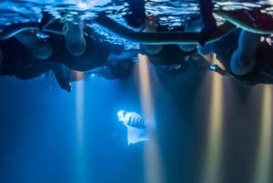 Big Island: Eco-Friendly Twilight Manta Ray Adventure