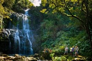 Big Island: Full-Day Kohala Zipline and Waterfall Adventure