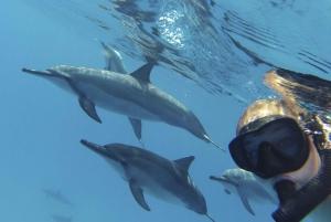 Big Island: Kealakekua Bay, Captain Cook & Marine Life Tour