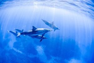 Big Island: Kohala Coast Wildlife Snorkel with Lunch