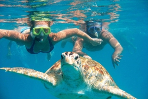 Hidden Gems of Oahu Tour with North Shore Turtle Snorkeling