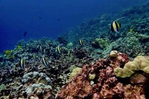 Hilo: 1-Tank Certified Beach Dive at Sea Turtle Cove