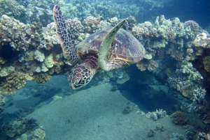 Hilo: Dolphin Adventure and Tropical Reef Snorkel Boat Tour