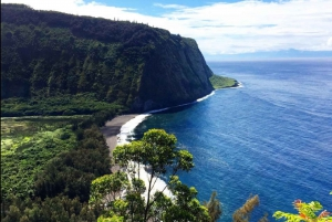 Hilo: Hilo Bay and Coconut Island Guided Kayak Adventure
