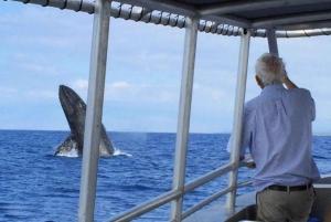 Kailua-Kona: Whale Watching Cruise