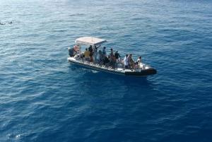 Kona: 1.5-Hour Guaranteed Whale Watching Tour