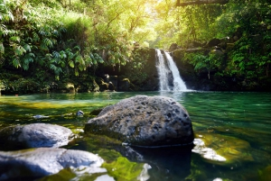 Maui: 3 Hour Rainforest & Waterfall Adventure for Families