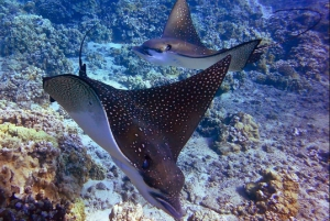Maui: Afternoon Snorkel to Coral Gardens or Molokini Crater