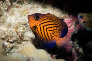 Maui: Beginner Discovery Scuba Dive Excursion from Lahaina