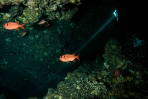 Maui: Eco-Friendly Night Dive Tour for Certified Divers