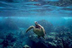 Maui: Pali Sea Cliff Kayak and Snorkel Tour