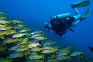 Maui: Two-Tank Lanai Private Diving Adventure to Cathedrals