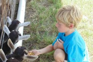 Maui: Upcountry Goat Farm Tour