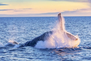 Maui: Whale Watch Kayaking and Snorkel Tour in Kihei