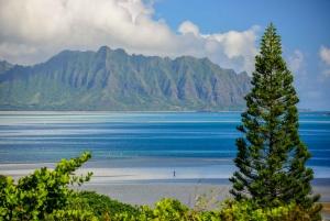 Oahu: 10-Hour Sunrise & Scenic View Points Photo Tour