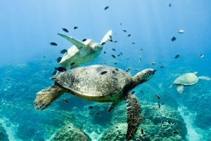 Oahu: 3-Hour Dolphin Watching & Snorkel Excursion in Waianae