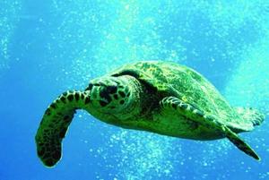 Oahu: 3-Hour Waikiki Snorkel & Sailing Adventure with Lunch