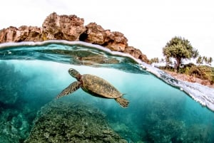 Oahu: Eco-Friendly West Oahu Snorkel Sail with Dolphins