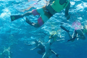 Oahu: Hilton Hawaiian Village Afternoon Snorkel Tour