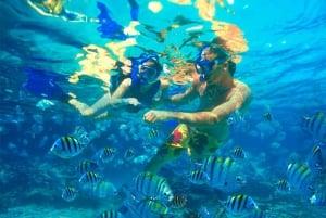 Oahu: Hilton Hawaiian Village Morning Snorkel with Lunch
