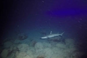 Oahu Night Dive: Adventure for Certified Divers