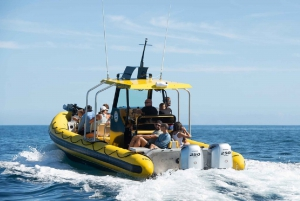 Oahu: North Shore Marine Life Tour
