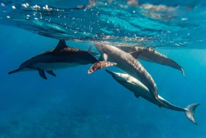 Oahu: North Shore Snorkeling Tour