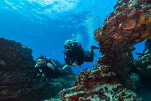 Oahu: Shallow Reef Scuba Dive for Certified Divers