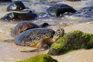 Private North Shore Oahu: Swim in a Tropical Waterfall