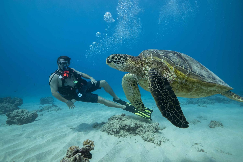 Waikiki: Oahu Discovery Scuba Diving for Beginners in ...