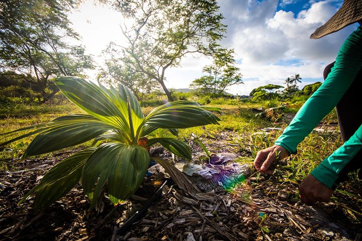 Community Service Day Hamakua Marsh