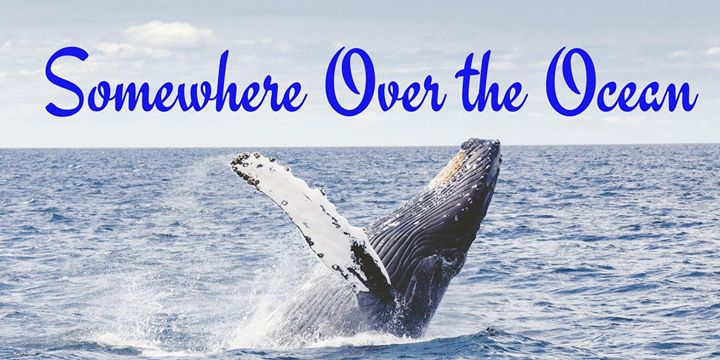 Somewhere Over the Ocean- Whale Watching Tour on the Majestic