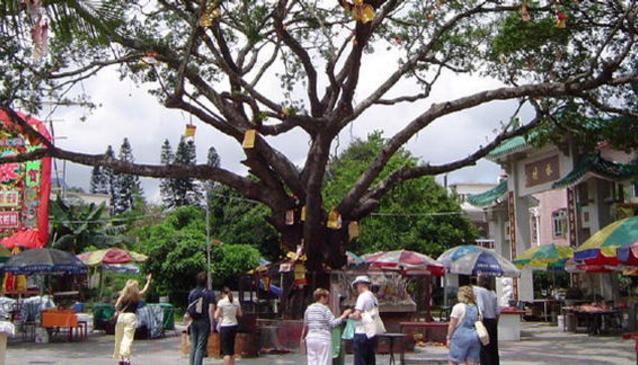 Lam Tsuen Wishing Trees