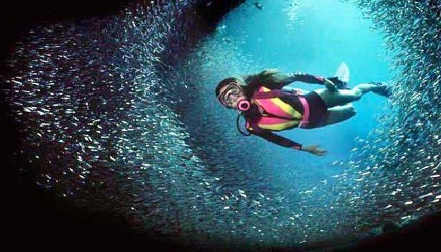 Diving in Beautiful Ibiza