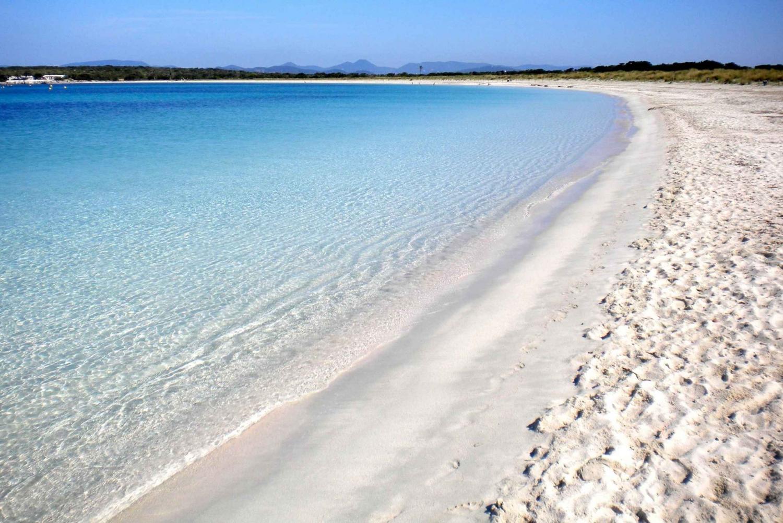 Discover Es Vedrà y Formentera