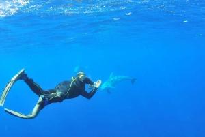 Ibiza: 3.5-Day PADI Open Water Dive Course