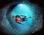 Top 5 Dives