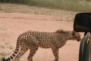 Ann van Dyk Cheetah Center & Lion Safari Park Day Tour