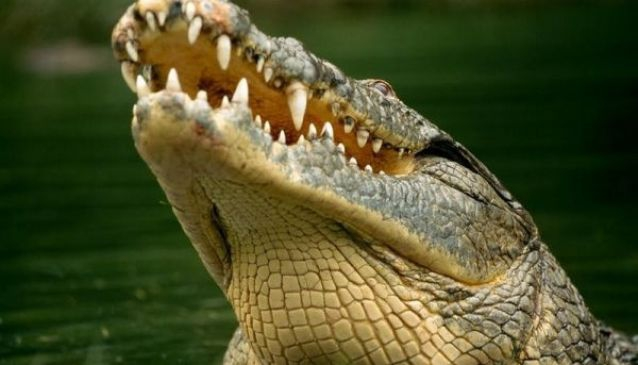 Crocodile and Reptile Park