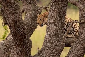 From Full-Day Kruger National Park Safari